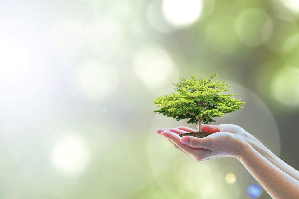 Umweltberichte 2019 – wichtige Informationen!